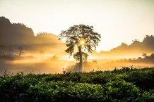 albero-all-alba